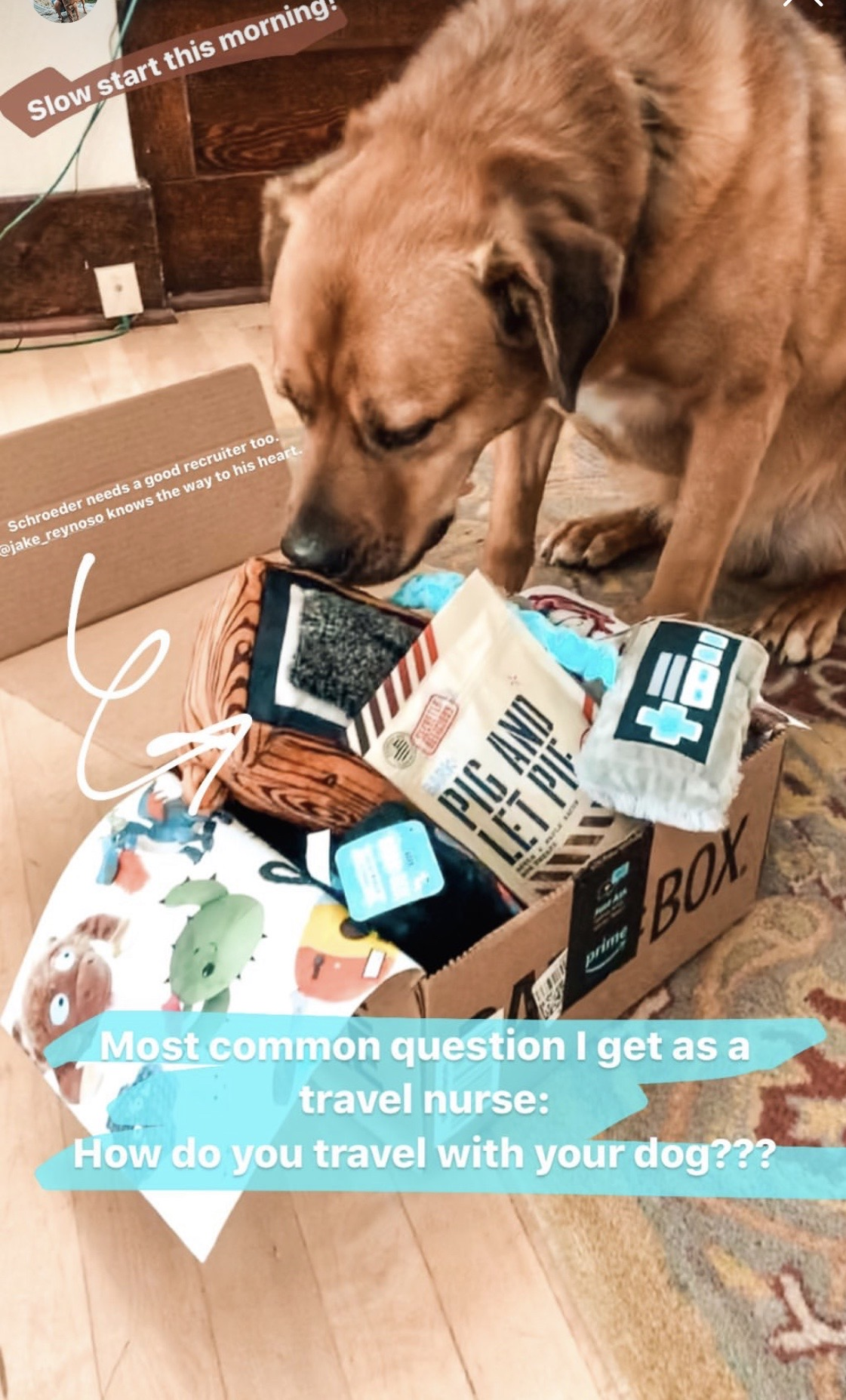 Travel Nurse Shelby's doggy sniffing around a box of goodies for him.